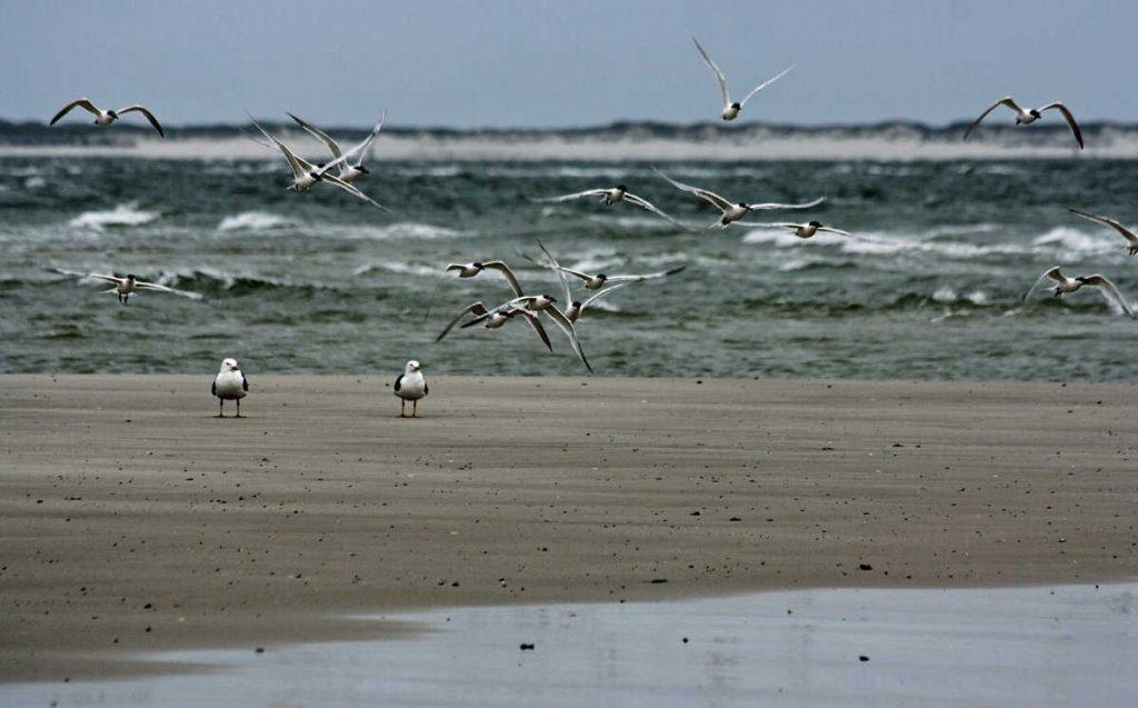 Zugvögel beobachten an der Nordsee